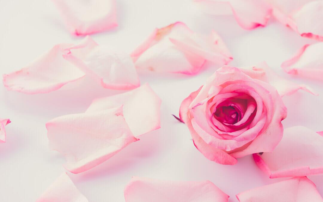 September blooms – New Beginnings